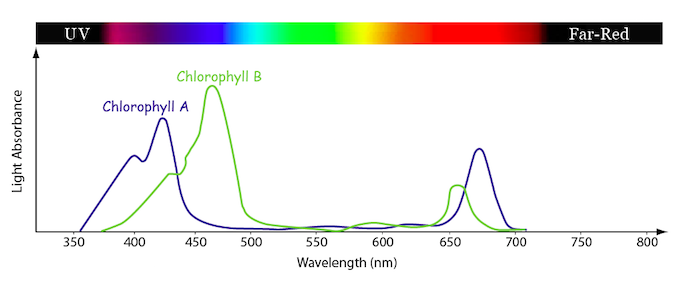 Line graph showing the relative amounts of light absoption at different light wavelengths of the photosynthetic pigments, Chlorophyll A and Chlorophyll B