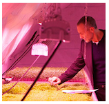 Image of a person tending to a hydroponic farm located in an underground tunnel by the start-up company, Growing Underground