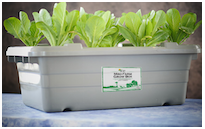 Image of the Mini Farm Grow Box hydroponic system from FoodRising.org