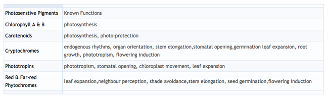 Summary table of the different photosensitive pigments found in plants and the biological processes they have each been linked to