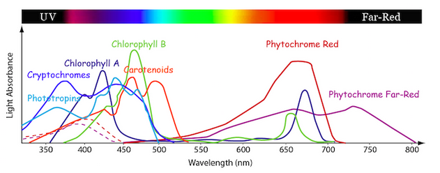 Line graph showing the relative amounts of light absorption at different light wavelengths by the photosynthetic pigments found in green plants