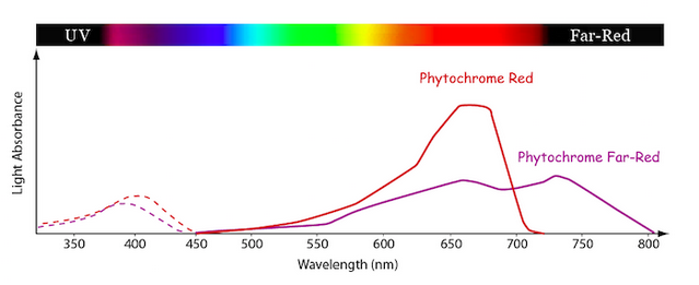 an analysis of the function of chlorophyll in plants Function: chlorophyll a fluorescence transient analysis and eqtl  the first ftsh protein in plants was reported in.