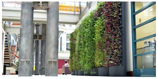 Image of a type of vertical wall garden known as PodPlants